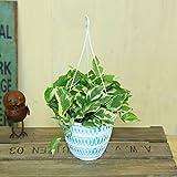 観葉植物:ポトスエンジョイ*吊り鉢