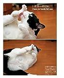つぶやき猫 猫たちと過ごす日々 画像