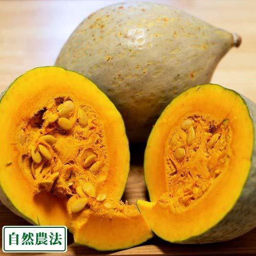 白栗かぼちゃ 10kg 自然農法 (青森県 小泉農園) 産地直送 ふるさと21