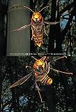 人を襲うハチ 4482件の事例からの報告 画像