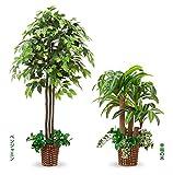 光触媒加工 観葉植物 癒しのインテリアグリーン2本セット ベンジャミン+幸福の木