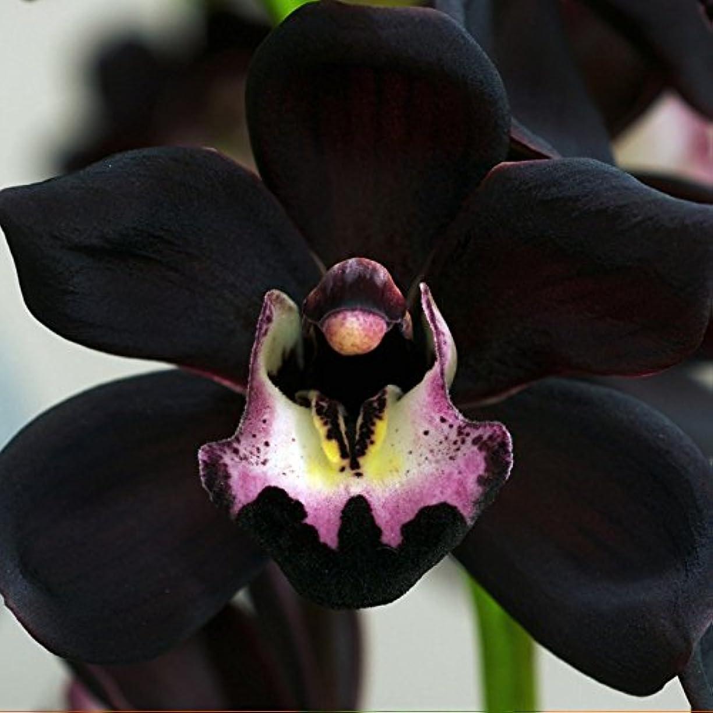 ポップ長いです破裂アロマフレグランスオイル ブラックオーキッド(Black Orchid)