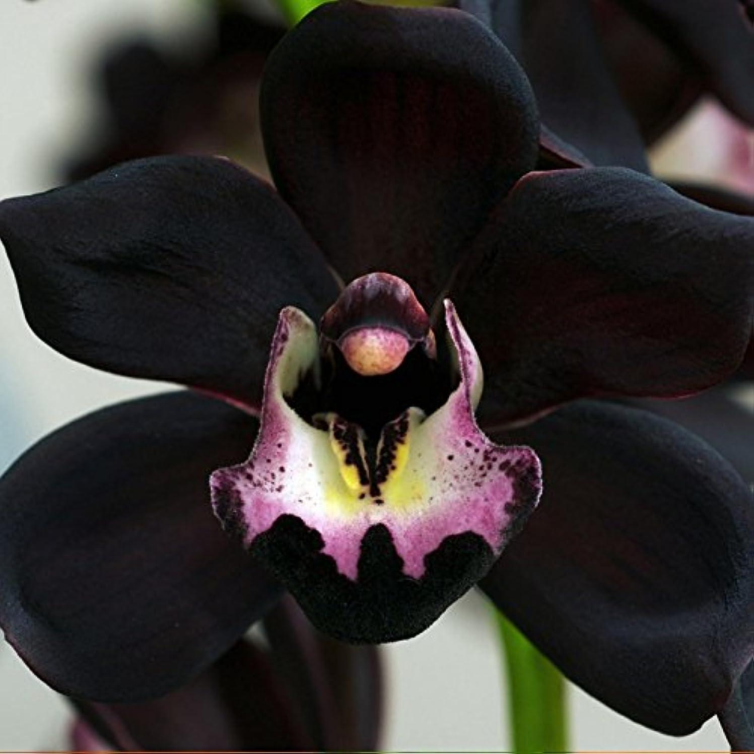 嵐ズームインする祈るアロマフレグランスオイル ブラックオーキッド(Black Orchid)