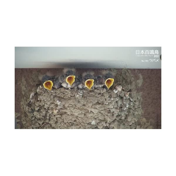 シンフォレストBlu-ray 日本百鳴鳥 2...の紹介画像23