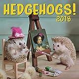 Hedgehogs 2018 Wall Calendar