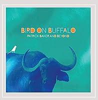 Bird on Buffalo