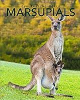 Marsupials: Amazing Pictures & Fun Facts of Animals in Nature
