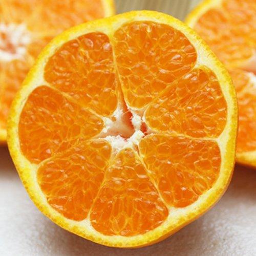 「ファミリー愛媛はるみ5」愛媛はるみ5kg デコくん(通称デコポン)の兄弟分,はるみみかん,はるみオレンジ 果物 フルーツ 柑橘 通販 希少品 安心光センサー選果合格品 ファミリー用