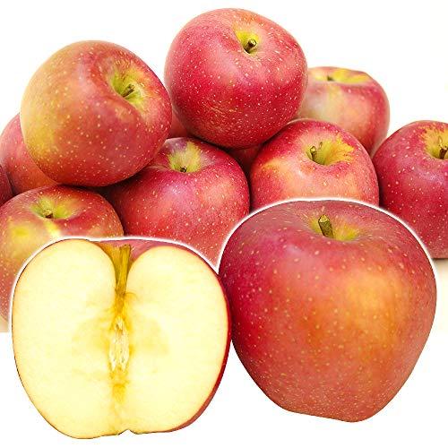 国華園 青森産 印度 りんご 5kg