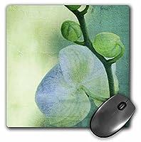 3drose LLC 8x 8x 0.25インチマウスパッド、Sea Orchid art-flowers-zen art-nature ( MP _ 38026_ 1)