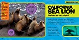 National Geographic Little Kids First Big Book of the Ocean (National Geographic Little Kids First Big Books) 画像