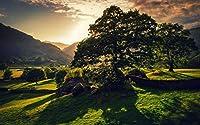 英国の自然の風景、木、太陽、緑、丘 キャンバスの 写真 ポスター 印刷 旅行 風景 景色 - (105cmx70cm)