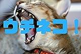 ウチネコ!(02)