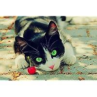 チェリー動物を見つめる猫 - #11302 - キャンバス印刷アートポスター 写真 部屋インテリア絵画 ポスター 90cmx60cm