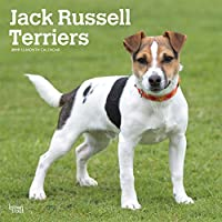Jack Russell Terriers 2019 Calendar