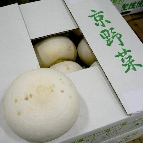 京都産  京野菜  聖護院かぶ  しょうごいんかぶ  2Lサイズ 2玉