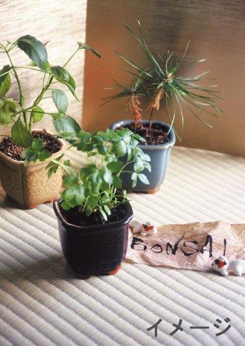 和心盆栽セット 黒松 GD-4201