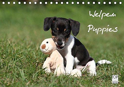 Welpen - Puppies (Tischkalender 2017 DIN A5 quer): Wandkalender (Monatskalender, 14 Seiten )