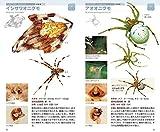 クモハンドブック 画像