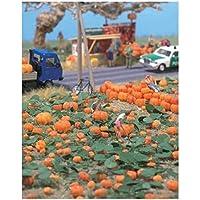 かぼちゃパンプキンパッチ – -キット – 80 (各種サイズ) 8個& Vines