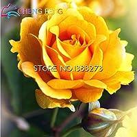 無料配信の100pcsバラの美しいストライプローズDIYのホームガーデン非常に簡単にSESを6色:レッド