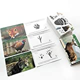 MEROCO Animal Track Game Flash Cards