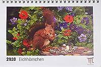 Eichhoernchen 2020 - Timokrates Kalender, Tischkalender, Bildkalender - DIN A5 (21 x 15 cm)