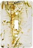 3drose LLC lsp 95398_ 1用紙Birchツリー、ワシントンArboretum、シアトルus48dgu0233ダレルグリンSingle切り替えスイッチ