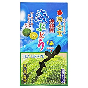 沖縄産 海ぶどう 塩水タイプ 100g×3箱