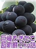 平成29年度 和歌山県【有田巨峰村】中尾さんの採れたて、超甘くて新鮮ぶどうを産地直送 2kg詰 化粧箱入