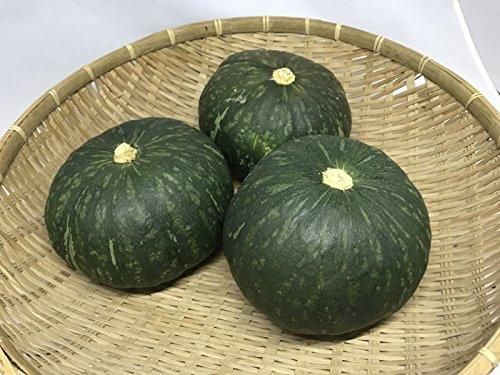 沖縄宮古島産かぼちゃ(栗かぼちゃ)1個(500g以上)