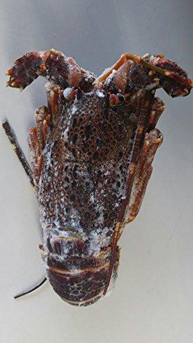 南アフリカ産 冷凍 縄文伊勢海老(生ロブスター)10匹(匹200-250g) 加熱してお召し上がりください。業務用