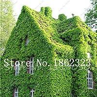 SEEDS:100個一括電子のbine盆栽日本の庭の装飾工場:11