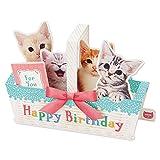 サンリオ 誕生日カード メロディ 立体 ネコバスケット P240