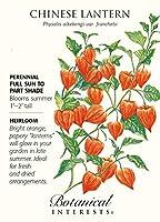 中国のランタン家宝種子 - 150ミリグラム - ホオズキ
