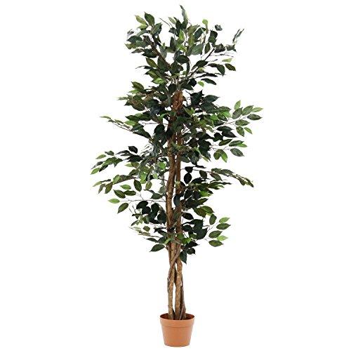 不二貿易 観葉植物 フィカス A 高さ150cm グリーン 52661