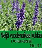 Neljä vuodenaikaa kukkia (Alkukesä) No.01 (Finnish Edition)