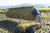 佐久名産 佐久のコシヒカリ 当年度産米 玄米5kg 天日干しはざ掛け米 産地直送