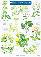 Guide to Woodland Plants (Field Studies Council Occasional Publications S.)