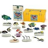 立体図鑑リアルフィギュアボックス コーラルリーフフィッシュ(サンゴ礁に棲む魚の仲間)