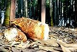 【産地直送】京都産の朝堀り白子筍(京たけのこ)2kg京都式軟化栽培(鮮度保持袋入、米ぬかを小袋に入れて同梱)【京都ベジラボ】
