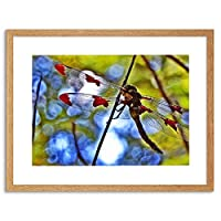 Photo Nature Dragonfly Insect Bug Colour Framed Wall Art Print