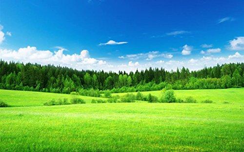 美しい自然の風景、フィールド、緑の草、木 キャンバスの 写真 ポスター 印刷 旅行 風景 景色 (90cmx60cm)