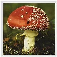 Danita Delimont–Fungi–UK、Fly AgaricマッシュルームFungi–eu33dsl0026–David Slater–グリーティングカード Set of 12 Greeting Cards