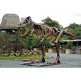 全長8m超!スケルトンT-REX(ティラノサウルス骨格) 超巨大造形物(恐竜等身大フィギュア)