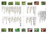 育ちや味がどんどんよくなる自然菜園で野菜づくり 画像