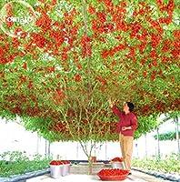 100個/バッグピンクトマトレアトマト有機野菜&アンプ;ホーム&アンプのフルーツ鉢植えの種子:ライトグリーン