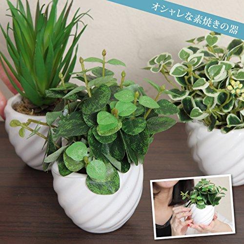 fleurmelody 光触媒 人工観葉植物 造花 3個セット ユーカリ2種 多肉植物 Ph-03-BC
