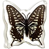 REALBUG Asian Swallowtail Butterfly Magnet [並行輸入品]