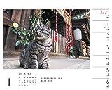 カレンダー2018 岩合光昭×ねこ 週めくり卓上 (ヤマケイカレンダー2018) 画像